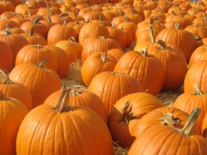 bigstock_Pumpkin_Patch_2508427