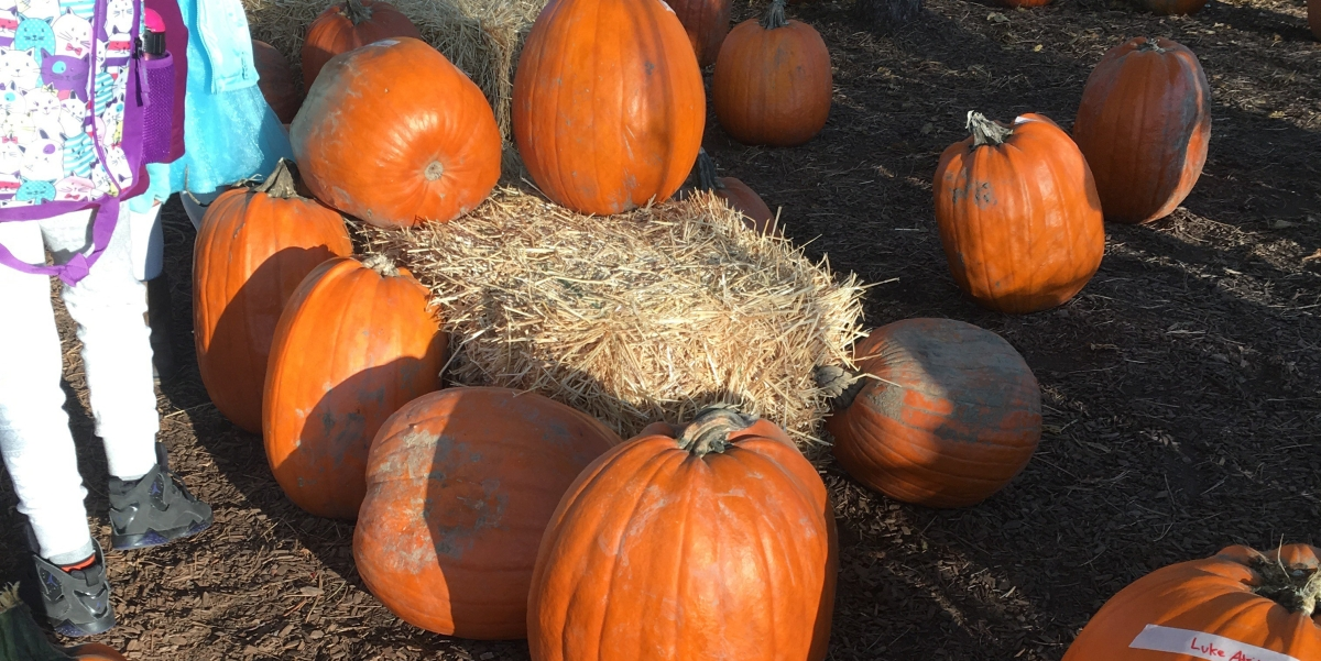 Pumpkin Patch Tally
